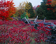 Split-rail fence with autumn colors of red sumac and sugar maple, Manitoulin Island near Lake Manitou, Lake Huron, Ontario, Canada.
