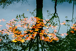 Leaves floating on the Canal du Midi with the reflections of a tree, Toulouse, France<br /> <br /> (c) Andrew Wilson | Edinburgh Elite media