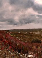 British Columbia Panorama from the Haines Highway. 1 of 4