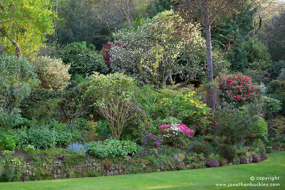 Main borders in the garden near the house at Greencombe with rhododendrons and azaleas