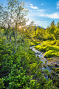 A stream babbles through a tranquil valley at sunset on the Alpine Loop in Utah