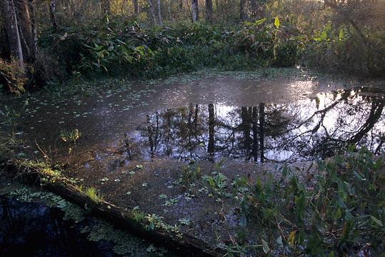 Florida, Corkscrew Swamp Sanctuary.