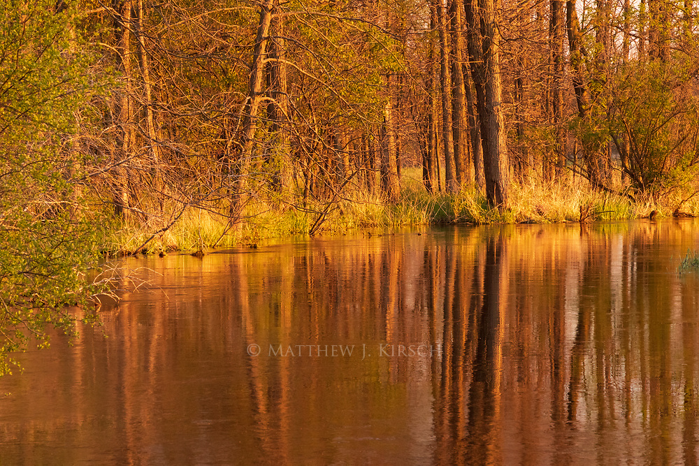 Trees in Reflection at Fox River in Brookfield, Wisconsin. April 2017