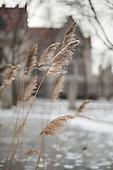 UChicago Snow