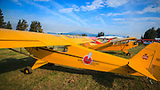 Piper J3 Cubs at Hood River Fly In at Western Antique Aeroplane and Automobile Museum