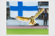 An eagle-owl made a 6-minute pitch invasion. After the incident, the Finnish national team was nicknamed after it. Finland - Belgium. Olympic Stadium, Helsinki, June 6, 2007.