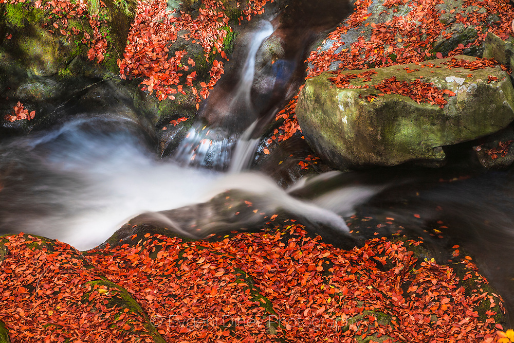 River bed covered with red autumn leaves