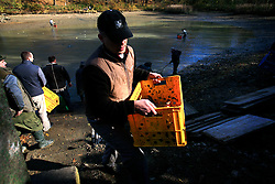 CZECH REPUBLIC MORAVIA BOJKOVICE 30OCT10 - Villagers carry boxes of harvested carp and other fish from a private pond near Bojkovice. ..Breeding carp and catching the fish by emptying the pond is an age-old tradition, as carp is the traditional Christmas Day dish in the Czech lands. In Bojkovice, the occasion occurs once every four years...jre/Photo by Jiri Rezac..© Jiri Rezac 2010