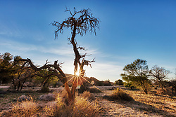Bare trees on landscape during sunset, Aus, Namibia, Africa