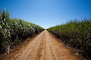 Nova Ponte_MG, Brasil...Paisagem em Nova Ponte com estrada de terra e agricultura...The landscape in Nova Ponte with dirt road and agriculture...Foto: LEO DRUMOND / NITRO