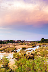 Elephants grazing along the banks of the Sabi River in Kruger National Park.  This photo would have been much better had it not been closing time at the park and a ranger kicked me off the bridge before that cloud turned crimson.
