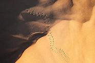 Desert - Animal Tracks