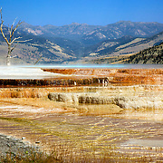Blue Spring and its travertine mineral deposits in the upper terrace area of Mammoth Hot Springs in Yellowstone National Park, Wyoming