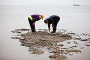 """Visitors collecting mussels on the slowly closing """"Mysterious Sea Road"""" at Hoedong shore (Jindo island). Jindo is the 3rd biggest island in South Korea located in the South-West end of the country and famous for the """"Mysterious Sea Route"""" or """"Moses Miracle"""". Every spring thousands flock to the shores of Jindo to walk the mysterious route that stretches roughly three kilometers from Hoedong to the distant island of Modo. Materializing from the rise and fall of the tides, the divide can reach as wide as forty meters."""