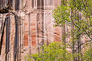 Desert varnish on cliffs along trial to Lower Calf Creek Falls, Grand Staircase-Escalante National Monument, Utah