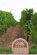 vineyard domaines dopff riquewihr alsace france