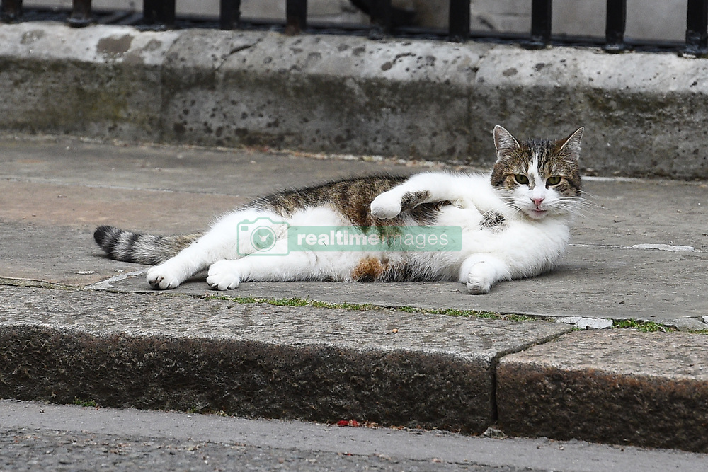 The Downing Street cat Larry enjoys the warm weather.