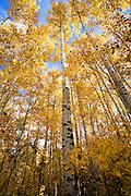 Fall Colors near Helena
