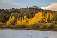 Turning of the aspen trees during the autumn season at Lost Lake Slough.  West Elk Mountains, Colorado.