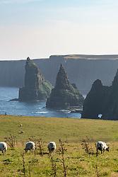 Sea stacks at Duncansby Head, near John O' Groats, Caithness, Highland, Scotland, United Kingdom