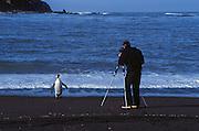 King penguin and photographer, South Georgia Island, Antarctica