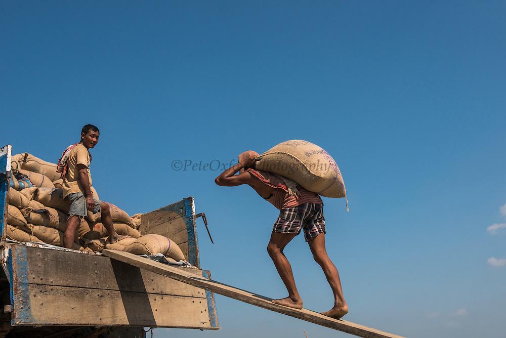Unloading sacks of rice<br /> Brahmaputra River<br /> Assam<br /> North East India