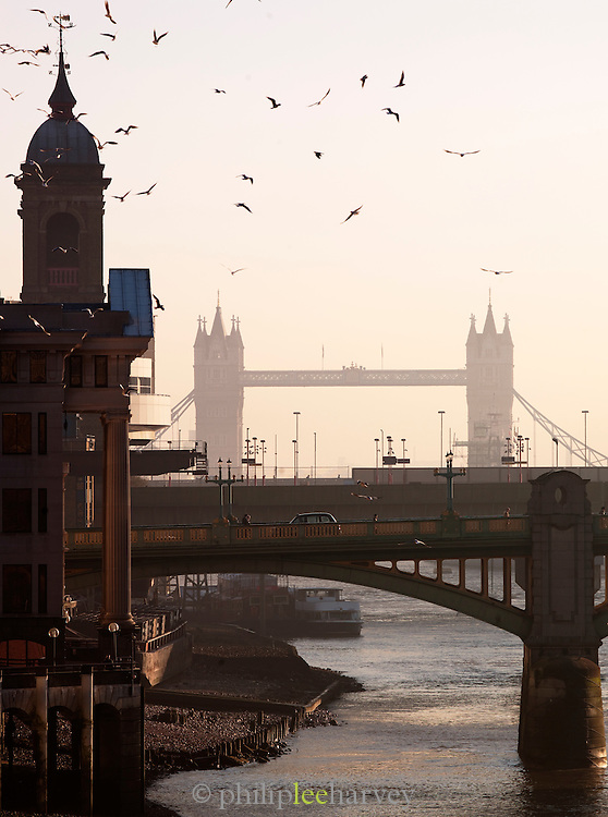 Birds fly above the River Thames at low tide, with view to Tower Bridge in London, UK