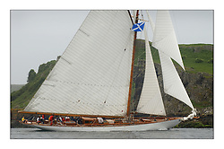 Moonbeam IV, a 105' Gaff Cutter sailing in the first day off Little Cumbrae...This the largest gathering of classic yachts designed by William Fife returned to their birth place on the Clyde to participate in the 2nd Fife Regatta. 22 Yachts from around the world participated in the event which honoured the skills of Yacht Designer Wm Fife, and his yard in Fairlie, Scotland...FAO Picture Desk..Marc Turner / PFM Pictures