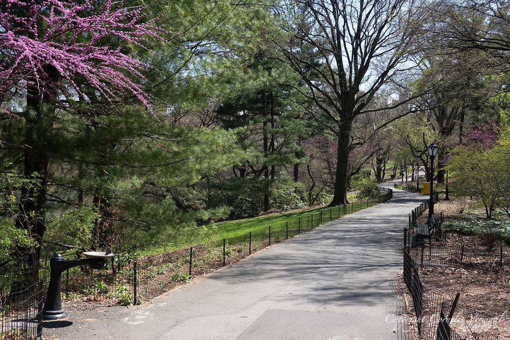 Central Park, south a Turtle Pond.