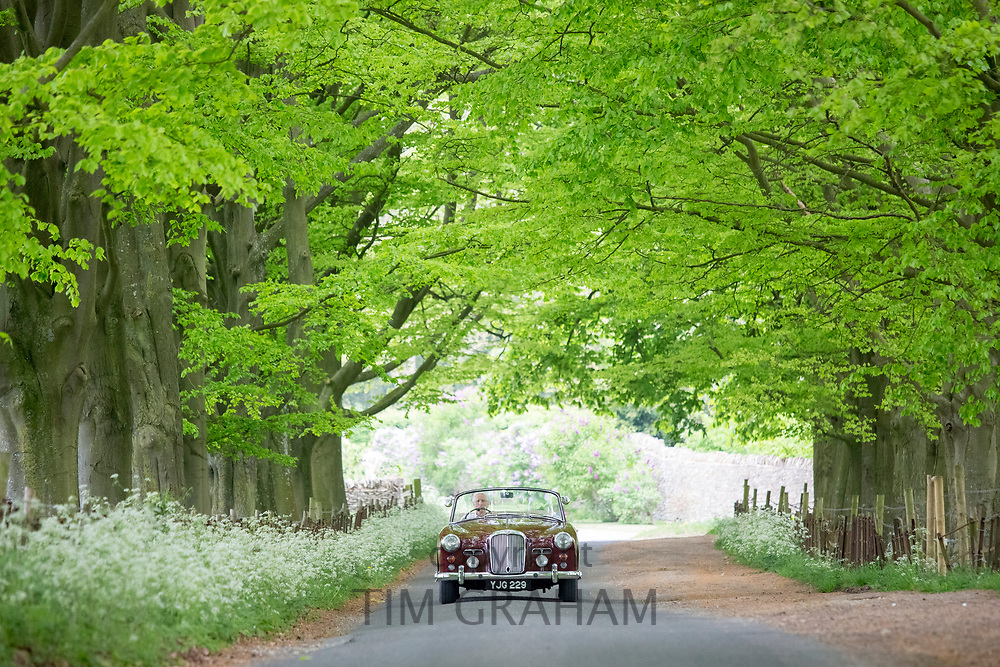 British made Alvis TD21 classic car motoring along an avenue of trees in a country lane in Asthall, The Cotswolds, England