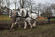 Irish ploughman Tom Nixon leads Shire horses Nobby and Heath as they harrow an on-going heritage wheat-growing area in Ruskin Park, a public green space in the borough of Southwark, on 9th February 2018, in London, England. The Friends of Ruskin Park are again growing heritage wheat and crops together with the Friends of Brixton Windmill and Brockwell Bake Association. Shire horses are descended from the medieval warhorse but are a breed under threat. Operation Centaur, which maintains the last working herd of Shires in London is dedicated to the protection and survival of the breed. It is an organization set up to promote the relevance of the horse as a contemporary working animal in partnership with humans. This takes the form of heritage skills in conservation and agriculture, transportation, discovery, learning and therapy.