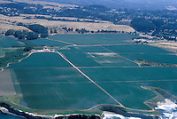 Ag Field from the Air, Watsonville, CA