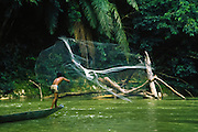 Fishing, cast net, Iban tribe, former headhunters, rainforest Skrang River, Sarawak, Borneo, Malaysia.