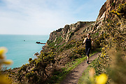 Woman enjoying an active healthy lifestyle, running on the cliff paths on the south coast of Jersey, CI surrounded by yellow gorse flowers in Spring