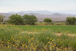 Bosque Del Apache National Wildlife Park