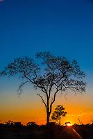 Acacia tree, sunrise, Kwando Concession, Linyanti Marshes, Botswana.