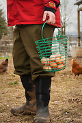 A basket of freshly gathered eggs.