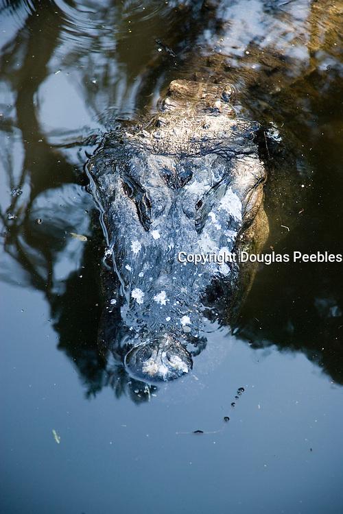 St. Augustine Alligator Farm, St. Augustine, Florida, USA<br />