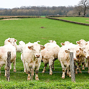 Dairy farm in Bourgogne, France