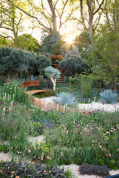 Sunrise in The Winton Beauty of Mathematics Garden, Chelsea Flower Show 2016. Mathematical symbols cut into band of copper running through the garden towards the belvedere platform. Pinus sylvestris 'Glauca' (blue Scot's pine),Yucca rostrata (Beaked Yucca)