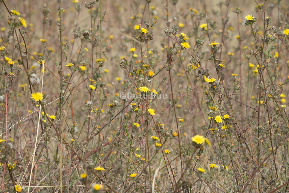 field with wild grasses and flowers