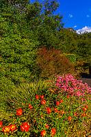 Flowers, Montecito (Santa Barbara), California USA.
