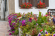 Flowers in a windowsill. Photographed in St. Moritz, Switzerland