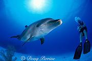 Spot, a wild, lone, sociable bottlenose dolphin, Tursiops truncatus, with Jason Belport, Cayman Islands ( Caribbean Sea ) MR 281