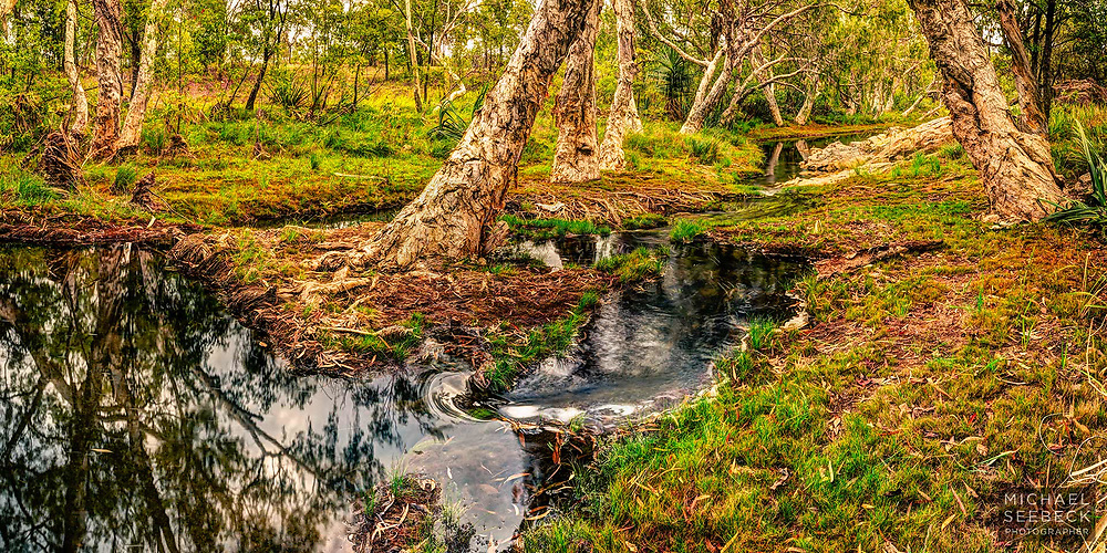 A small outback creek winds its way through stands of paperbarks (melaleucas), in the early morning. In the wet season, the country is still green & lush.<br /> <br /> Code: BAQT0004
