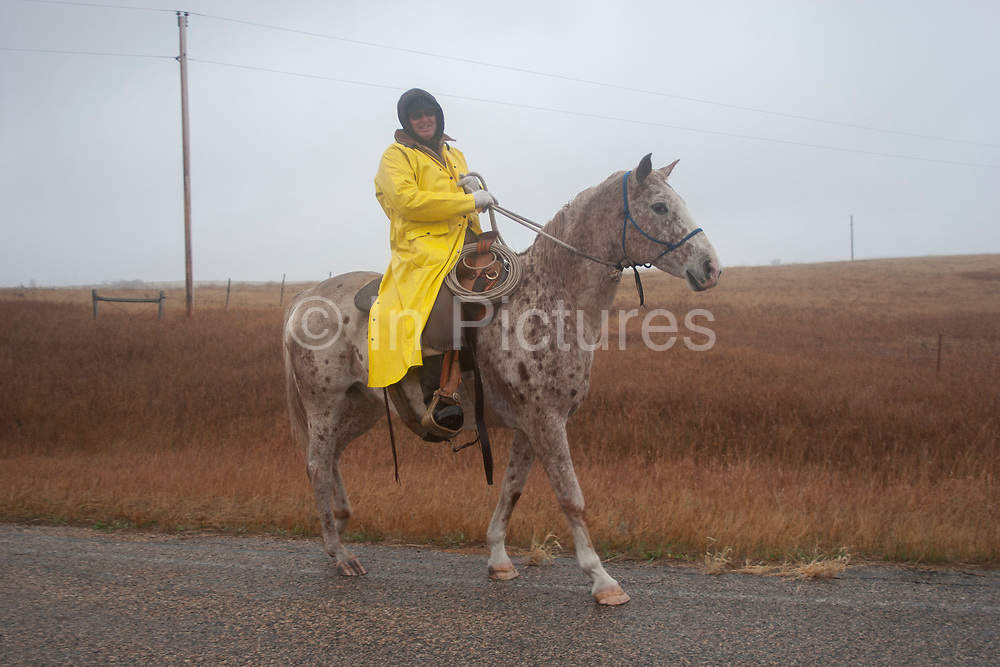 A local cowboy stops to say hello whilst out working his herd of cattle on a cold wet morning near Minot, North Dakota, United States. Dressed in a waterproofs and wearing leather chaps he rides his faithful horse as has been traditional. Nowadays many cowboys use quad bikes instead of horses.