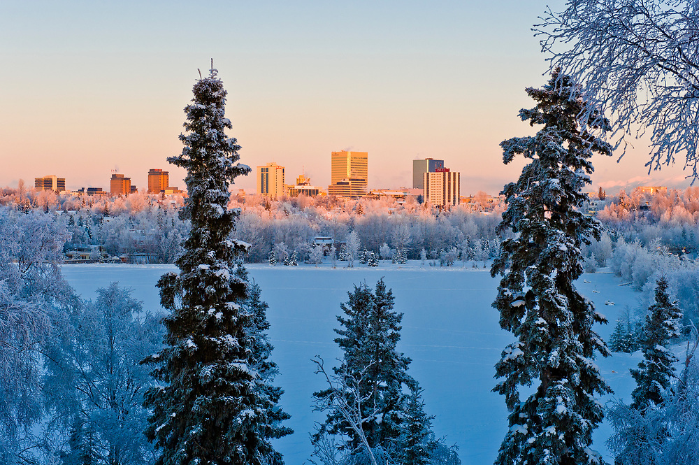 Alaska, Anchorage, Spruce tree bBranches frame the downtown, skyline with snow in winter