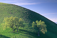 Oak tree and green hills in spring, in the Tassajara Region, Contra Costa County, CALIFORNIA