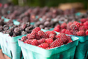 Tay berries from the 2012 Oregon Berry Festival