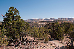 USA, Utah, hiking at Escalante at Escalante Petrified Forest State Park to enjoy the petrified wood, views of the Grand  Staircase and Colorado Plateau, and local vegetation such as pinon pine and Utah juniper.